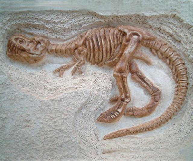 【品牌】泰国DIGITUP 【品名】泰国DIGITUP手工考古恐龙挖掘骨架化石(小平面霸王龙) 【产地】泰国 【材质】天然岩泥 【规格】泥盘一个、工具一套、说明书一份。 【尺寸】盒子尺寸:13.5*21*5.5cm 【适用人群】建议6岁以上 【产品特点】 *纯天然岩泥 *天然树脂 *造型逼真 *激发学习兴趣 *恐龙的关节是可以活动 【品牌介绍】 泰国 Dig It Up公司(译作:挖出来),FOZEX 恐龙考古挖掘玩具的创造者,拥有12年的历史。一直被模仿,从未被超越!产品畅销欧美,采用泰国纯天然岩泥做覆