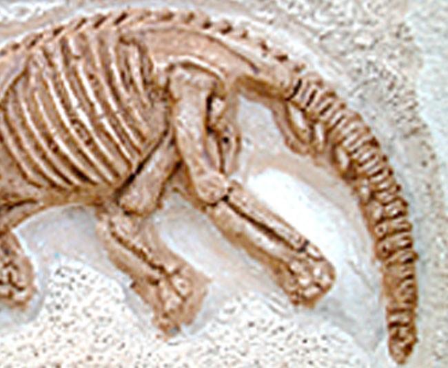 【品牌】泰国DIGITUP 【品名】DIGITUP手工考古恐龙挖掘骨架化石(小平面三角龙) 【产地】泰国 【材质】天然岩泥 【规格】泥盘一个、工具一套、说明书一份。 【尺寸】盒子尺寸:13.5*21*5.5cm,恐龙骨架拼好后长约20-25cm 【适用人群】建议6岁以上 【产品特点】 *纯天然岩泥 *天然树脂 *造型逼真 *激发学习兴趣 *恐龙的关节是可以活动 【品牌介绍】 泰国 Dig It Up公司(译作:挖出来),FOZEX 恐龙考古挖掘玩具的创造者,拥有12年的历史。一直被模仿,从未被超越!产品畅